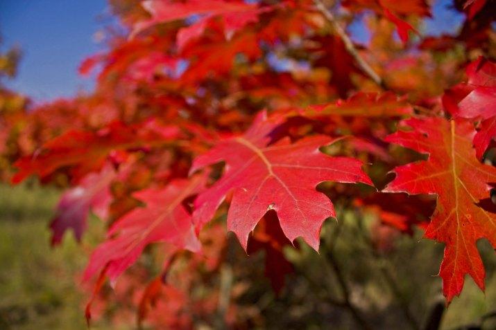 ..a je tu podzim