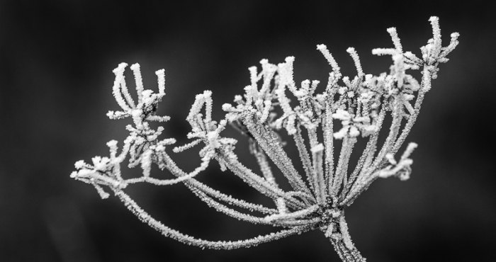 Photoworkshop fotografování MAKRO rostliny